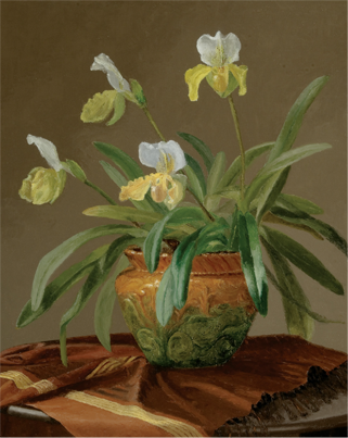 Orchids in Majolica Pot