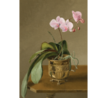Orchid with Cascading Leaves