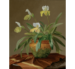 Orchid in Majolica Pot